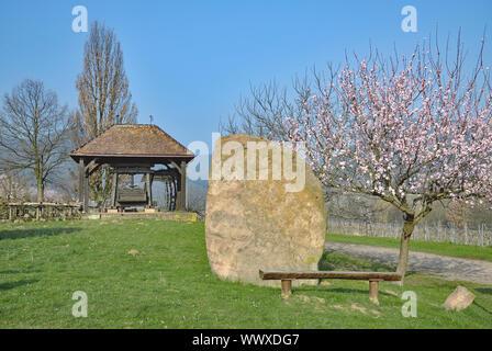 Almond Blossom in Edenkoben,Palatinate,Germany - Stock Photo