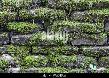 Stone wall covered with moss - Stock Photo