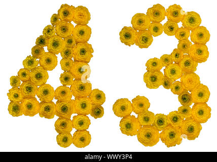 Arabic numeral 43, forty three, from yellow flowers of buttercup, isolated on white background - Stock Photo