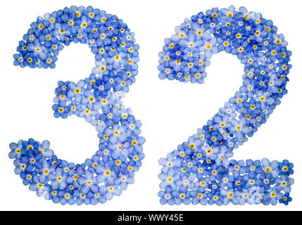 Arabic numeral 32, thirty two, from blue forget-me-not flowers - Stock Photo