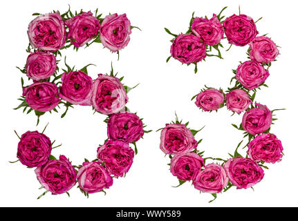 Arabic numeral 53, fifty three, from red flowers of rose, isolated on white background - Stock Photo