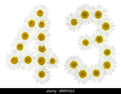 Arabic numeral 43, forty three, from white flowers of chamomile, isolated on white background - Stock Photo