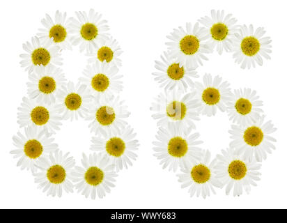 Arabic numeral 86, eighty six, from white flowers of chamomile, isolated on white background - Stock Photo