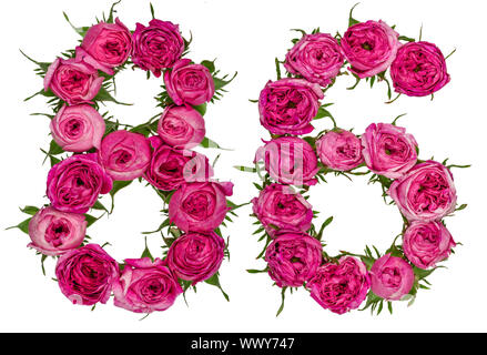 Arabic numeral 86, eighty six, from red flowers of rose, isolated on white background - Stock Photo