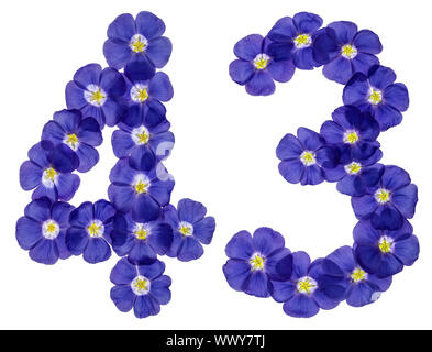 Arabic numeral 43, forty three, from blue flowers of flax, isolated on white background - Stock Photo