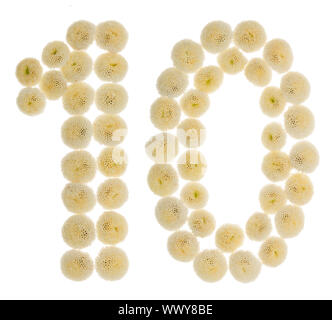 Arabic numeral 10, ten, from cream flowers of chrysanthemum, isolated on white background - Stock Photo