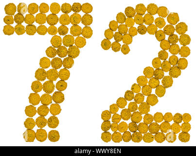 Arabic numeral 72, seventy two, from yellow flowers of tansy, isolated on white background - Stock Photo