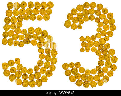 Arabic numeral 53, fifty three, from yellow flowers of tansy, isolated on white background - Stock Photo