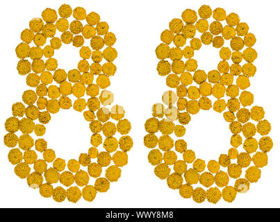 Arabic numeral 88, eighty eight, from yellow flowers of tansy, isolated on white background - Stock Photo