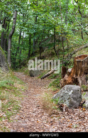 Hiking trail in the Harz Mountains - Stock Photo