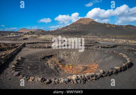 Vineyards in La Geria, Lanzarote, Canary Islands, Spain - Stock Photo