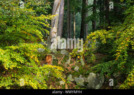 Autumn in the Harz National Park - Stock Photo