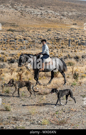 Gaucho riding his horse accompanied by dogs, El Chalten, Patagonia, Argentina, South America - Stock Photo