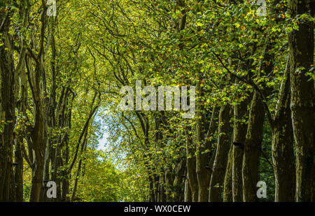 Walkway, lane, path with green trees in the forest - Stock Photo