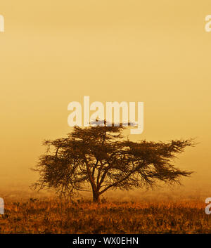 Lonely tree in the mist - Stock Photo