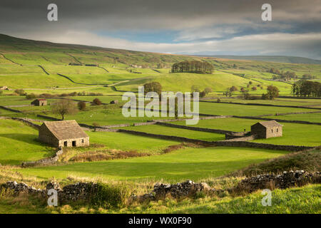 Stone barns and dry stone walls in the rolling countryside of Wensleydale near Hawes, Yorkshire Dales, Yorkshire, England, United Kingdom, Europe