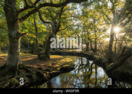 Early morning sunshine penetrates the deciduous woodland surrounding Ober Water near Puttles Bridge in the New Forest National Park, Hampshire, England, UK - Stock Photo