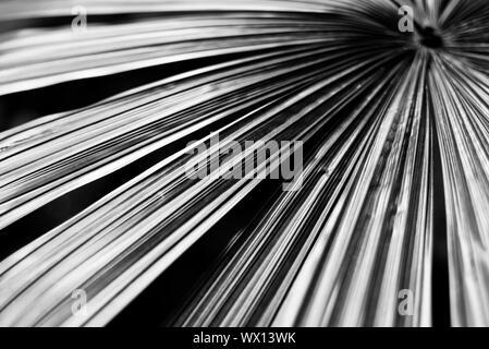 Washington DC Travel Abstract Aesthetic Mood Shots - Stock Photo