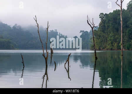 Dead standing trees as evidence of the preexisting forest in the Cheow Lan lake in the national Park - Stock Photo