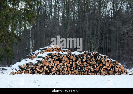 Wooden poles in winter - Stock Photo