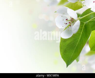 Beautiful Spring Blossoms Border - Stock Photo