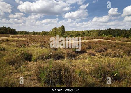heathland, nature reserve Wahner Heide, Troisdorf, North Rhine-Westphalia, Germany, Europe - Stock Photo