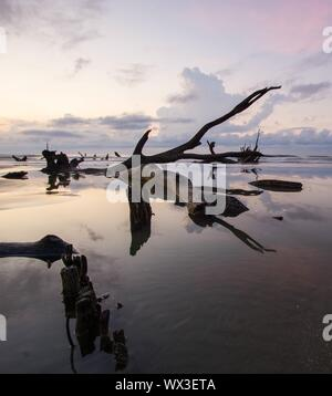 sunrise on a beach with old driftwood and reflections - Stock Photo