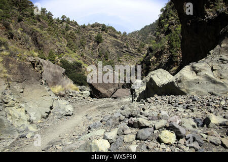 Hike through the Barranco de Las Angustias - Stock Photo