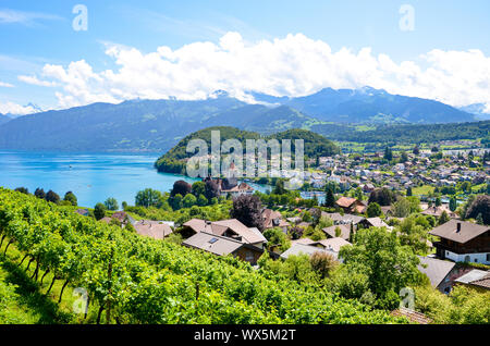 Picturesque Alpine village Spiez located by Lake Thun in Switzerland photographed in the summer season. Green vineyards on the adjacent slopes. Swiss landscape. Peaks of the Alps in the background. - Stock Photo