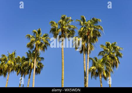 Palm trees against a deep blue sky - Stock Photo