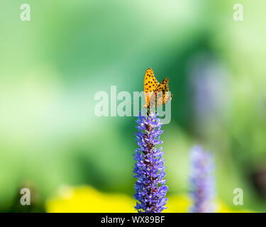 butterfly settled on the flower - Stock Photo