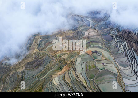 aerial view of terraced fields in clouds fog - Stock Photo