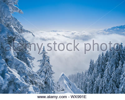 Winter Christmas scenic snow landscape background, with spruce trees in the foreground, sea of clouds and misty mountain peaks f - Stock Photo
