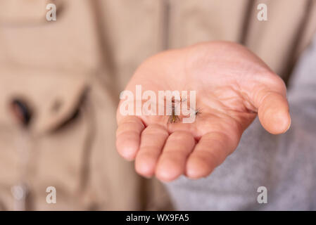 Fisherman showing fishing fly hook in hand palm. - Stock Photo