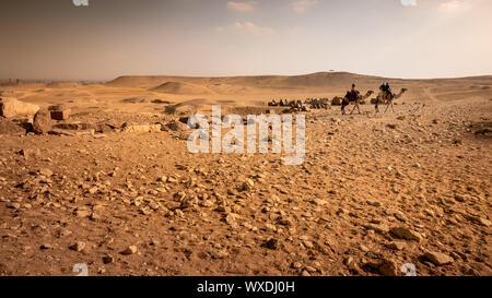 camel ride in the desert Cairo Egypt - Stock Photo