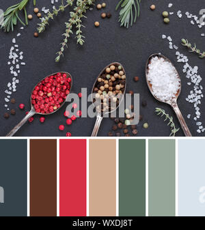 Color matching palette from image of herbs with salt and pepper in spoons on black slate stone background, top view, flat lay. Rosemary, thyme, salt a - Stock Photo