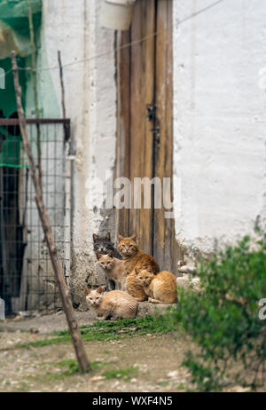 Herd of cute brown cats sitting on the porch - Stock Photo