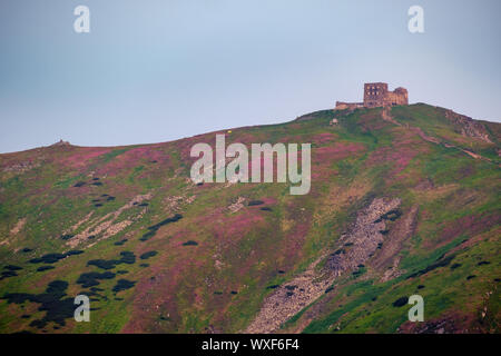 Pip Ivan mount and observatory and rhododendron flowers on slope - Stock Photo