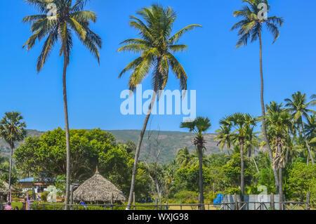Yarada Beach, Vishakhapatnam, Andhra Pradesh, India December 2018 - Coconut palm trees against blue sky and staw hut on a tropical island. Its a popul