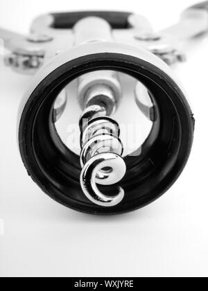 Macro of wing corkscrew isolated on white background - Stock Photo