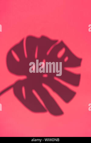 Top view on shadow of monstera leaf on pink background. - Stock Photo