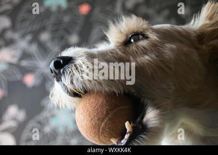 Portrait and dettail of a dog - Stock Photo