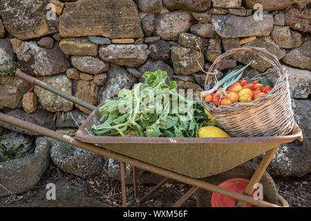 Fresh vegetables and fruit in a wheelbarrow. Long squash leaves, melons and wicker basket with tomatoes, chives and zucchini Stock Photo