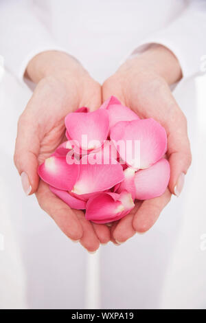 Closeup midsection of a woman holding hands full of petals against white background - Stock Photo