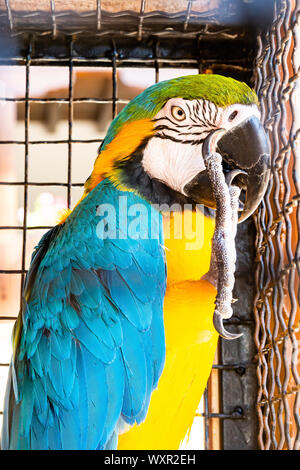 Ara Ararauna parrot in cage, North Macedonia - Stock Photo