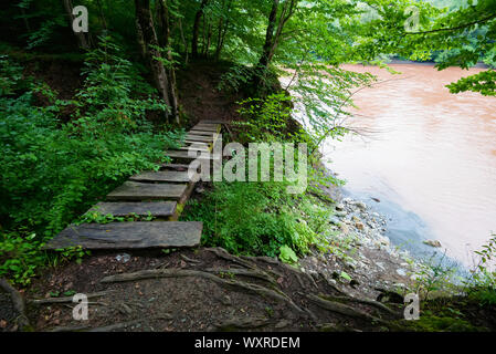 Wooden planks laid over a hole in forest on river bank - Stock Photo