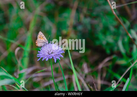 insect, butterfly sitting on a flower in green grass, summer day, close-up - Stock Photo