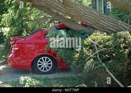 A tree that has fallen on a car due to hurricane - Stock Photo