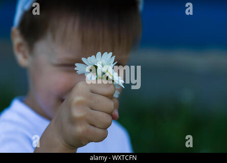 A little caucasian boy 4 years old in white t-shirt is holding camomiles in his hand. Selective focus on flowers. Summer outdoors time. Useful templat - Stock Photo