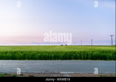 peaceful and minimalistic scene of paddy field in the early morning dawn with warm and purple light and few clouds in the sky in the ebro delta park - Stock Photo